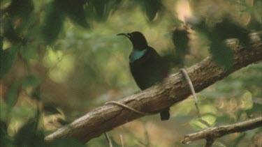 male sits on branch singing