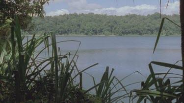 pan across Lake Eacham through pandanas plants