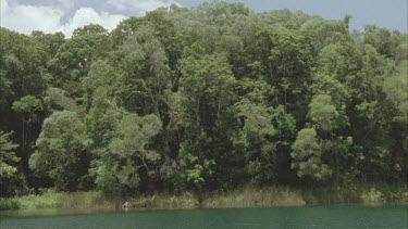 pan down from trees to Lake Eacham, very clear water.
