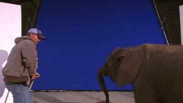 Elephant African