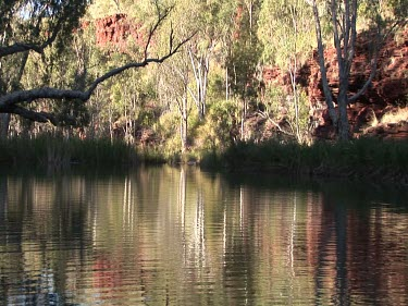 Pool or river surrounded by eucalypt forest in Australian Outback