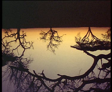 Reflections of acacias in water at sunset. Shot fades to black.