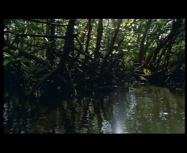 Margins of mangrove channel