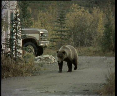 Bear walking past house and car