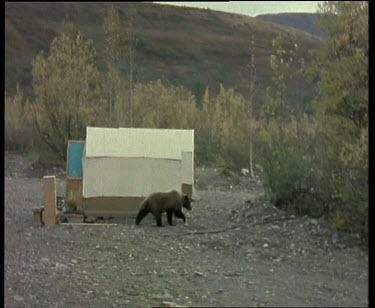 Two shots. Bear walking past house and car. Dog barking at bear.
