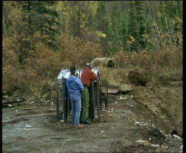 Men shooting at bear with tranquilizer dart, bear takes fright and runs away.