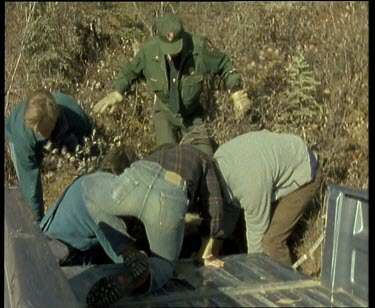 Sequence of shots. Relocating a bear that has become a pest to human habitation.