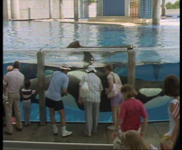 Curious onlookers look at killer whales in enclosure