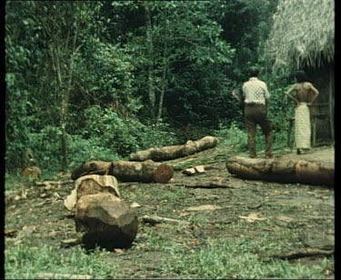 Indian Elephant moving logs