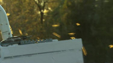 Hives with swarming bees, their wings reflect orange yellow sunlight