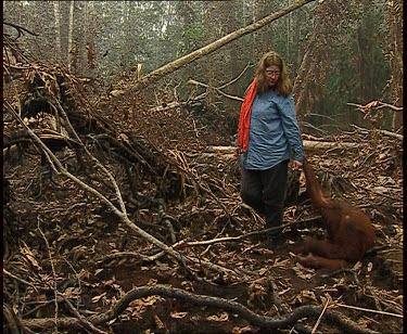 Orangutan and woman in forest clearing