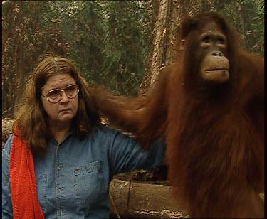 Orangutan falls
