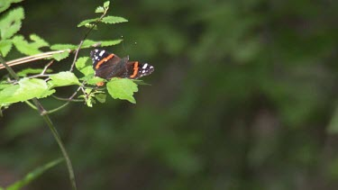 Butterfly flying off a branch