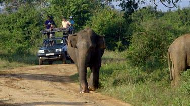 Asian Elephant & Tourist, Udawalawe Safari Park, Sri Lanka
