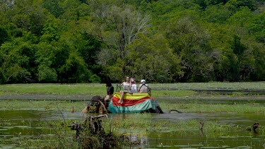 Elephant Ride In Lake, Sigiriya, Sri Lanka